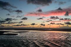 Into the Distance (Alex Wrigley) Tags: sunset seascape beach birds coast landscapephotography beachphotography coastalphotography lakedistrictphotography cumbriaphotography alexwrigley alexwrigleyphotography