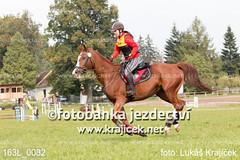 163L_0082 (Lukas Krajicek) Tags: military czechrepublic cz kon koně vysočina vysoina southbohemianregion blažejov dvoreček všestrannost dvoreek