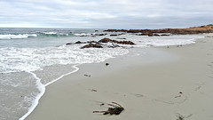 California-06595 -  Asilomar State Beach (archer10 (Dennis) 141M Views) Tags: california usa sony unitedstatesofamerica free dennis jarvis pacificgrove asilomarstatebeach pointpinos iamcanadian freepicture dennisjarvis archer10 dennisgjarvis