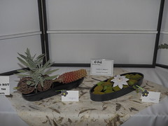 "Beehive, Protea & Sage & Flower on mossy stones by Carla Imray ""Ichiyo School"". (nano.maus) Tags: lauritzengardens japaneseflowerarrangement omahabotanicalsociety japaneseambiencefestival"