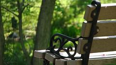 Empty (Sarah_Brigham) Tags: park brown black green sarah garden bench photography photo alone sad empty thoughtful brigham emptybench emptychair sarahbrigham