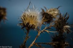Fall (danfryer2) Tags: camping lake fall beach weeds nikon lakeerie wheatley wheatleyprovincialpark