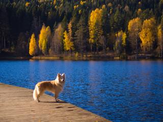 Dog Days of a Norwegian Autumn