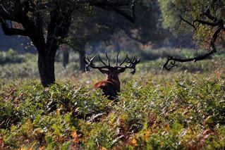 Autumn antlers II