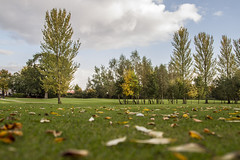 OGC - landscape (dareangel_2000) Tags: autumn trees light shadow green fall leaves club golf landscape belfast golfcourse northernireland magichour goldenhour ormeau 123nature leaffall naturewatcher ormeaugolfclub dariacasement