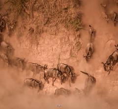 DSC_2201 (Jorge kaplan) Tags: africa nikon kenya safari mara d750 nikkor kenia masai 28300mm masaimara