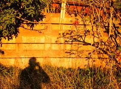 20151010-DSC_6731 (sarajoelsson) Tags: color mamiya film rural mediumformat evening 645 sweden slidefilm september velvia slides fujichrome summerhouse goldenhour latesummer diafilm filmphotography mamiya645protl 80mmf19 lohärad mellanformat digitizedwithdslr