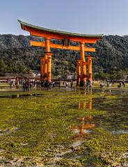 Reflected Torii (-Astin-) Tags: trip travel vacation reflection japan shrine miyajima trips hdr itsukushima toriigate canon7d tokina111628