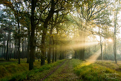 Stappersven (Samantha_Brant) Tags: morning trees light sun green love nature beautiful sunshine forest sunrise landscape woods nikon walk calm tokina heide kalmthout kalmthoutseheide tokina1224mm stappersven nikond7100