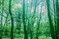 IMG_0058.jpg WM (MetallicNuance) Tags: nature ethereal country kent sky trees woodland