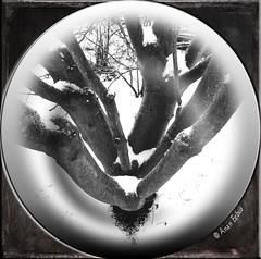 """faithful"" 15th dec 2015 (Anan Eebus) Tags: christmas xmas winter snow cold tree ice gardens photography december advent monotone secondlife anan ananeebus"