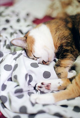 E Meow's life (Steve only) Tags: contax 139 quartz 139q carl zeiss planar 1450 t 5014 50mm f14 tstar cy kodak gold 200 film epson gtx970 v750 cats e喵 gb200