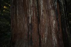 IMGL0055 (komissarov_a) Tags: california park bridge trees canon coast fantastic rainbow squirrels treasure unitedstates state unique oneofakind seasonal salmon streetphotography trails deer huge 5d redwoods trout m3 campground rgb raccoons jurassic groves smithriver 1939 crescentcity largest steelhead chipmunks blackbears beauiful oldgrowth природа blacktailed парк jedediahsmith campsites hiouchi туризм дикий древний хвойные огромные фантастический гигант доисторический секвойя komissarova севернаякалифорния гигантские юрскойпериод