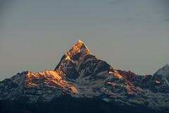 Machapuchare 6993m (Poxxel) Tags: nepal sunrise sonnenaufgang sarangkot machapuchare