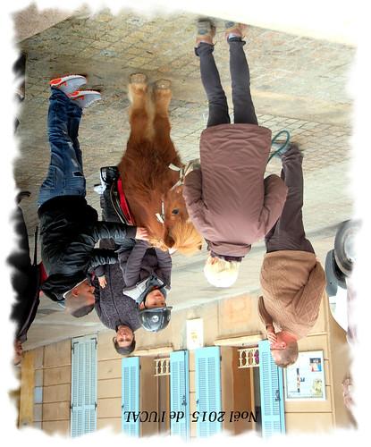 Manège & poneys (15)