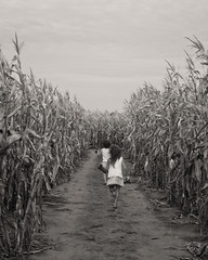 Children of the corn (annemconnor@yahoo.com) Tags: girls nature kids children outside back corn child farm ngc farming daughter running barefoot maze agriculture anonymous immigration runningaway migrant anchorbaby