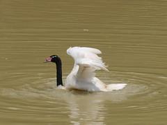 P2230528 (Gareth's Pix) Tags: aviarionacionaldecolombia baru colombia aviario bird
