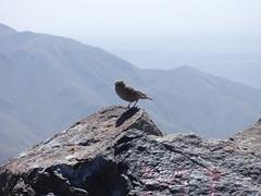 P1120656 (Terezaestkov) Tags: maroko morocco vysokatlas highatlas atlasmountains dabaltubkal jabaltbql jbeltoubkal onthetop