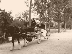Anachronisme (alainpere407) Tags: alainpere paris streetsofparis candidpictureinparis parisinsolite parisromantique parissepia sepia horse cheval saariysqualitypicturesgallery