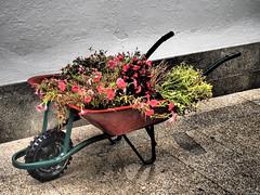 Transporte ecolgico (Luicabe) Tags: ngc airelibre aparato cabello calle carretilla enazamorado exterior flor herramienta luicabe luis mquina planta tierra yarat1 zamora