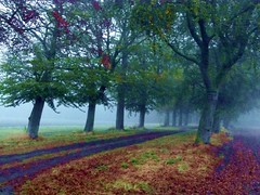 2016-10-21 brume (27)alle (april-mo) Tags: fog mist mistymorning brume arbres trees autumn villerscampeau wood