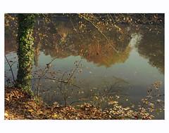 Autumn in Bruges # 2 (bruXella & bruXellius) Tags: reflections reflets automne autumn herbst brgge brugge bruges belgium belgien belgique belgi