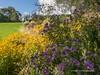 Clyne Gardens 2016 09 30 #24 (Gareth Lovering Photography 3,000,594 views.) Tags: clyne gardens botanical swansea wales flowers trees shrubs park olympus stylus1s garethloveringphotography