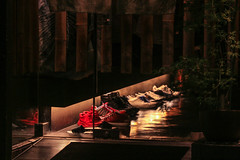 IMG_2276 (Brainra) Tags: japan tokyo osaka kyoto takayama fish japanese japonais japon deer daim biche cerf nara temple temples shinto buddha buddhist trip journey adventure katakana hiragana kawaii owl car cat cats owls animals plants nature wood wooden houses habitat streets street statue landscape