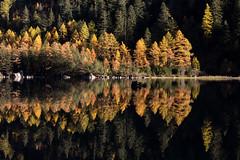 Il y a le feu au lac (Sven Vietmeier) Tags: automne derborence lärche mélèzes rando schweiz suisse switzerland valais wallis wanderung randonnée lã¤rche mã©lã¨zes randonnã©e