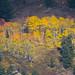 Golden+Grove+of+Trees+-+Telescope+View