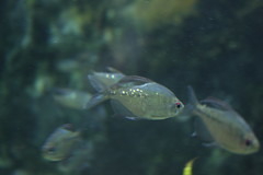 IMG_5675 (godpasta) Tags: newportaquarium kentucky newport aquarium