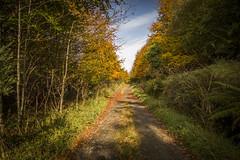 Autumn (Stevie Toye) Tags: autumn donegal ireland colour nature landscape beauty irish ulster season seasonal