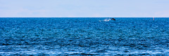 Dolphin @ Spey Bay, Scotland (vonHabsburg) Tags: scotland schottland dolphin delfin meer sea ozean ocean blue blau jump spring joy freude animal tier coast kste shore ufer speybay