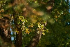 _DSC2513 (BrettGV) Tags: autumn sonnart18135