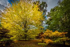 Oxford University Harcourt Arboretum. (Anthony P Morris) Tags: oxford university harcourt arboretum 1 anthonymorrisanthony p morrisanthony morris farmoor southoxfordshiredistrict england unitedkingdom gb anthonypmorris oxforduniversity harcourtarboretum oxfordshire