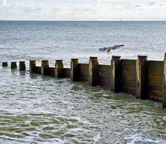 cleared for landing (friendlydrag0n) Tags: seagull gull landing flight sea ocean groyne defence defense horizon