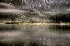 Almsee  #Obersterreich #Grnau  #Almtal #nikon #See  # Morgenstimmung #Nebel #fog #lake (michaelavondruska) Tags: instagramapp square squareformat iphoneography uploaded:by=instagram ludwig dieschnstenortesterreichs obersterreich upperaustria almtal grnau see