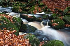 Leaves....... (klythawk) Tags: leaves rocks water autumn nature stream longexposure moss green brown orange yellow grey black white olympus em1 omd 1240mm padleygorge peakdistrict derbyshire klythawk