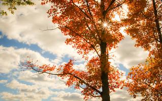 ~Fall Song~