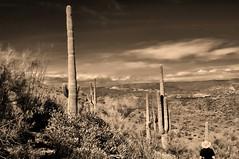out there again (rovingmagpie) Tags: arizona rocksprings blackcanyontrail aguafriariver bradshawmountains saguarocactus saguaro cactus desertforests df2016 kani
