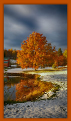 20161023_171455 First snow of the season (MiFleur...Thanks for visiting!) Tags: oak fallcolors automne arbre newhampshire citeecologiquenh
