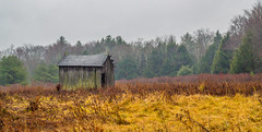 An Old Shed On A Rainy Day (Catskills Photography) Tags: shed building farm field landscape rural abandoned fall autumn canon50mmf18lens