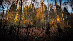 Bark Ablaze (Augmented Reality Images (Getty Contributor)) Tags: autumn canon colours fall forest landscape leefilters light longexposure nature perthshire scotland sunset trees woodland