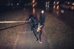 Rainy Night Walk III (ScottMPhotos1) Tags: dog night fisheye canon 15mmf28