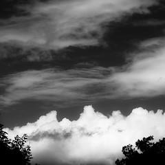 Springtime Skies 007 (noahbw) Tags: d5000 nikon prairiewolfsloughforestpreserve abstract blackwhite blackandwhite bw clouds forest landscape monochrome natural noahbw sky spring square trees woods