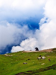 India (jingupark) Tags: india film landscape rohtangpass