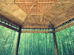 Bamboo grove from the gazebo - Hefei Botanical garden, China (Germn Vogel) Tags: asia eastasia china anhui hefei travel traveldestinations traveltourism tourism nature park garden botanicalgarden chinesegarden gazebo bamboo grove bamboogrove green ceiling architecturemeetsnature calm peaceful relaxing frame