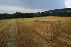 Harvested Fields, Harley, Shropshire 18/08/2016 (Gary S. Crutchley) Tags: shropshire much wenlock harley rural fields harvest argiculture uk great britain england united kingdom nikon d800 evening raw crops 1635mm f40g af s ed nikkor