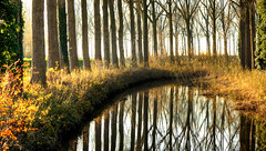 """All truly great thoughts are conceived by walking."" - Friedrich Nietzsche (genevieve van doren) Tags: damme flanders westvlaanderen reflection reverberation trees arbres water eau"