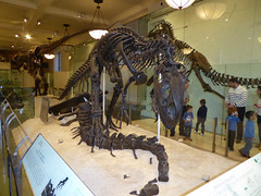 American Museum of Natural History New York November 2016 (31) (Richie Wisbey) Tags: american museum natural history upper west side new york city usa central park night exhibits dumdum dum monkey dinosaur bones fossils explore vast building easter island head theodore teddy roosevelt animals richard wisbey richie flickr